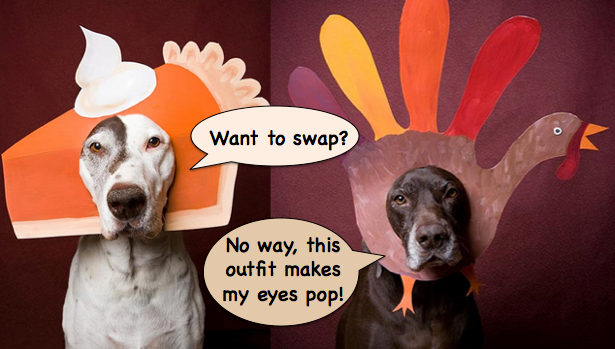Thanksgiving pets