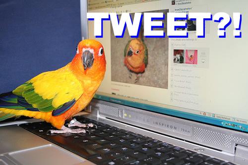 Bird On Computer