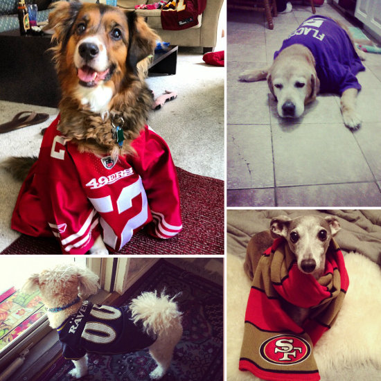 Football Dog Costumes