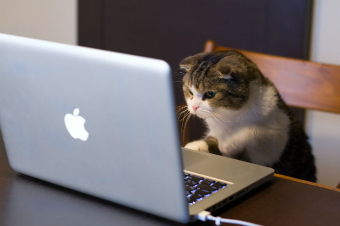 Cat using Apple laptop